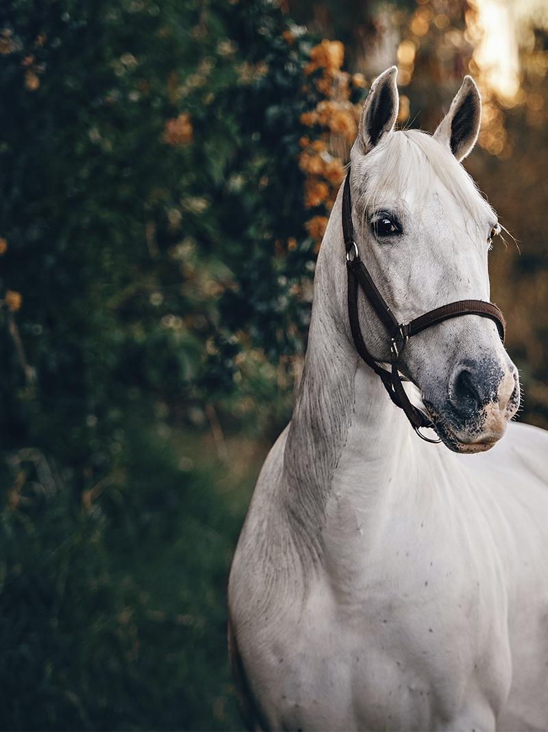 Unicorn Coaching